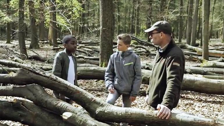 Film: Nederlandse bossen leveren biomassa voor duurzame energie
